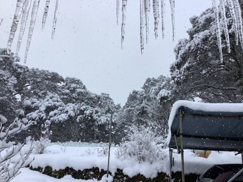 長崎は5年ぶりの大雪〜9日の雪景色_d0336460_01251823.jpeg