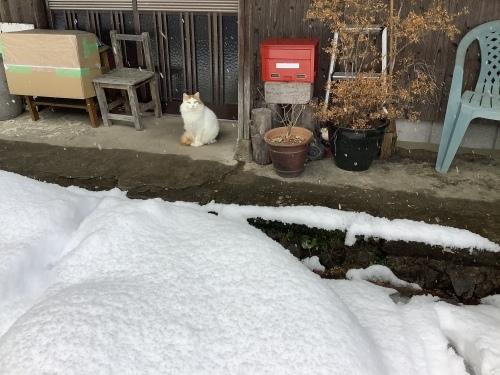 長崎は5年ぶりの大雪〜9日の雪景色_d0336460_01334589.jpeg