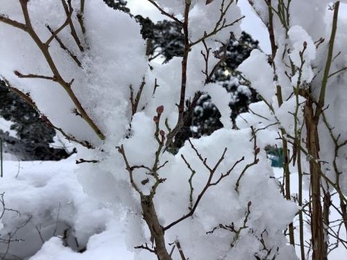 長崎は5年ぶりの大雪〜10日の氷柱_d0336460_15212169.jpeg