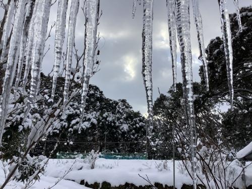 長崎は5年ぶりの大雪〜10日の氷柱_d0336460_15223134.jpeg
