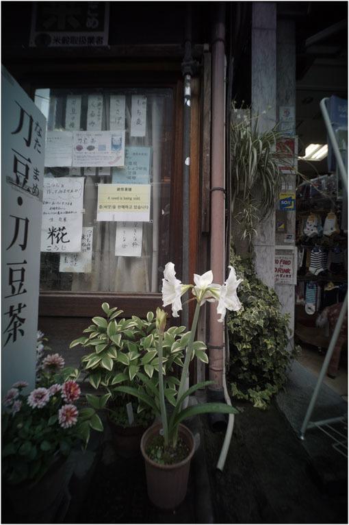 875.02 生き生きと(2020年5月30日ホロゴン15mmF8は勝手知ったる奈良町をのびのび散歩)2 心に音楽を_c0168172_00501522.jpg
