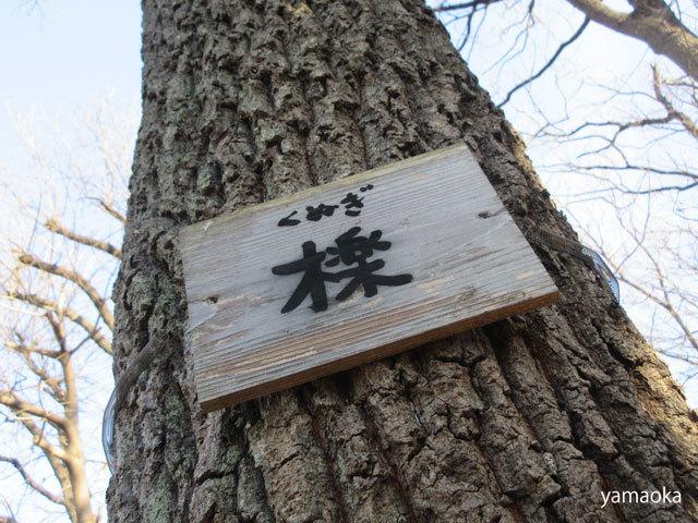 寒木を寒木として……_f0071480_16513762.jpg
