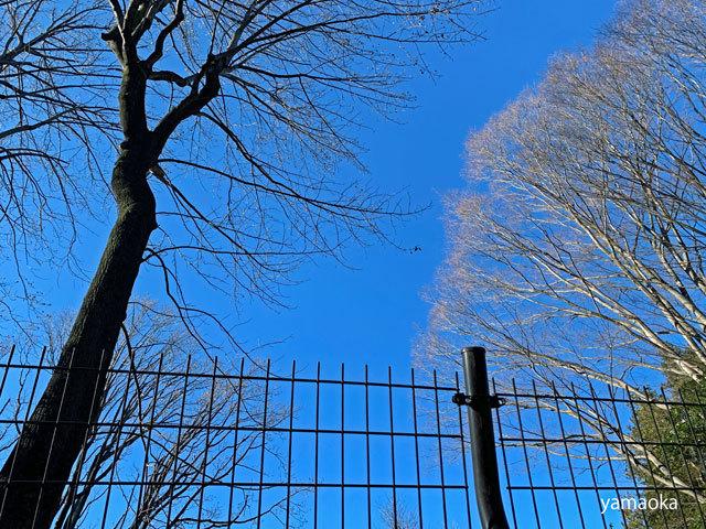 寒木を寒木として……_f0071480_17242725.jpg