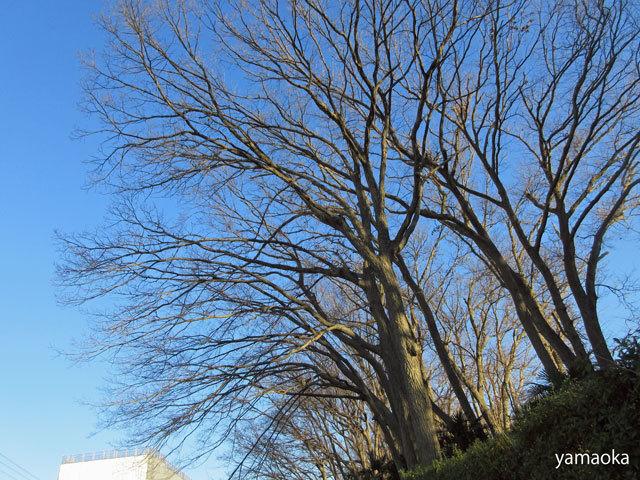 寒木を寒木として……_f0071480_17242984.jpg