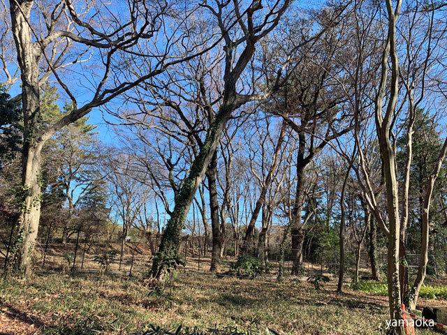 寒木を寒木として……_f0071480_17434242.jpg
