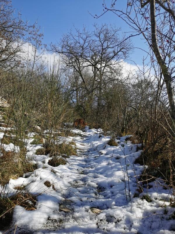 ラーラと山散歩_f0106597_01480925.jpg