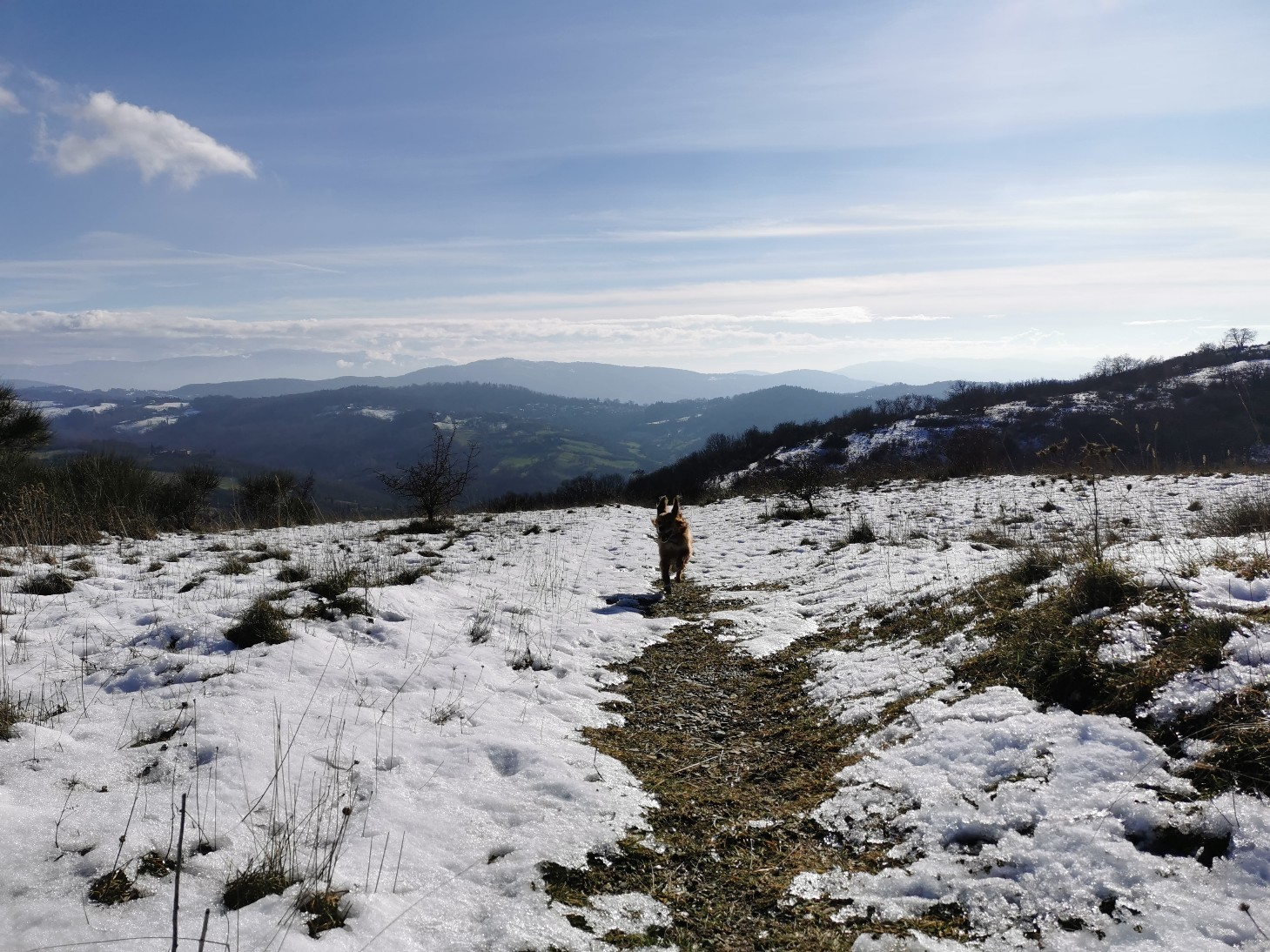 ラーラと山散歩_f0106597_02095276.jpg