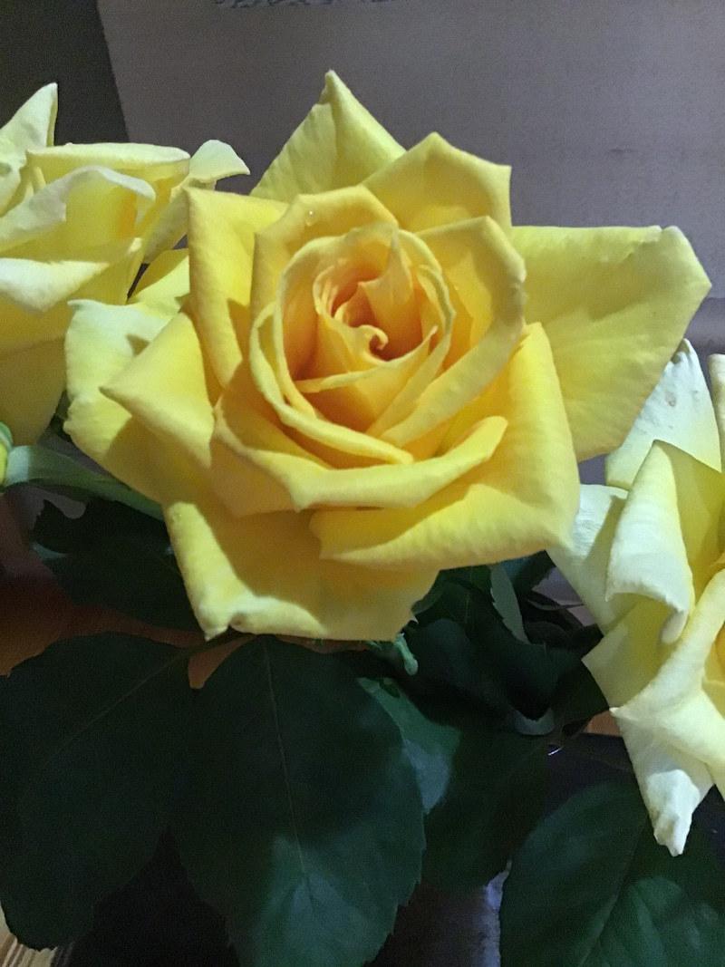 灯りになるバラと音楽と振袖_c0404712_22182813.jpg