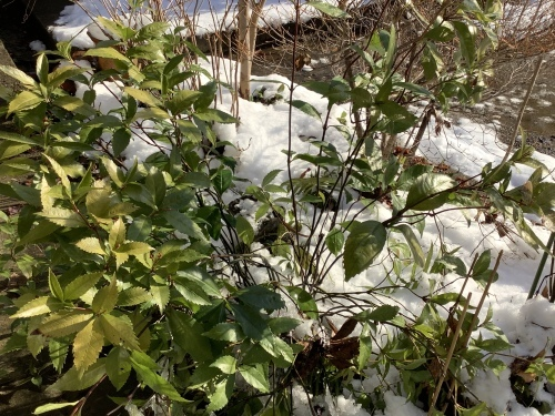 雪解け〜11日_d0336460_17490158.jpeg