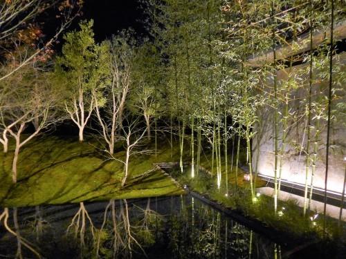 京都・二条城「Singlar シンギュラー」へ行く。_f0232060_20025154.jpg