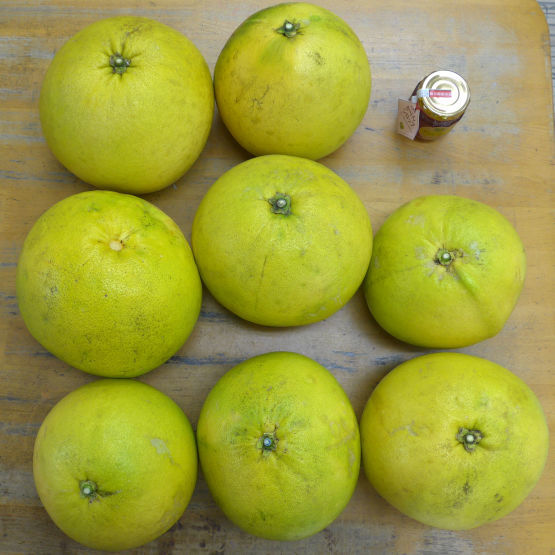 晩白柚とキウイフルーツが入荷しました。_d0170122_14295094.jpg