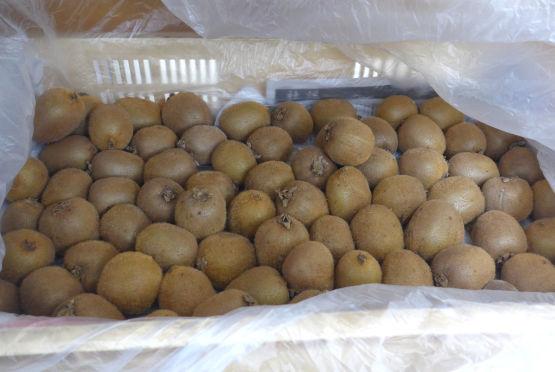 晩白柚とキウイフルーツが入荷しました。_d0170122_14321474.jpg