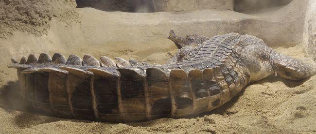 1月11日の円山動物園のは虫類・両生類館_b0014576_22462508.jpg