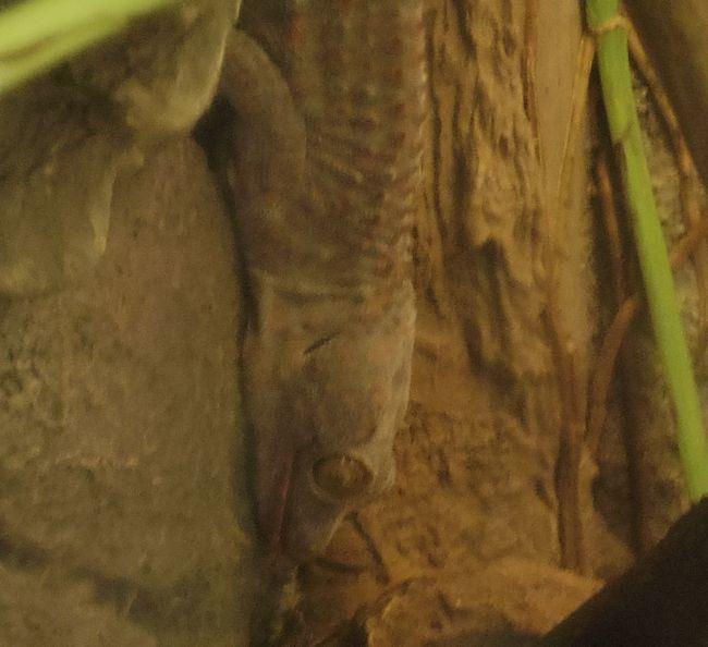 1月11日の円山動物園のは虫類・両生類館_b0014576_22464156.jpg