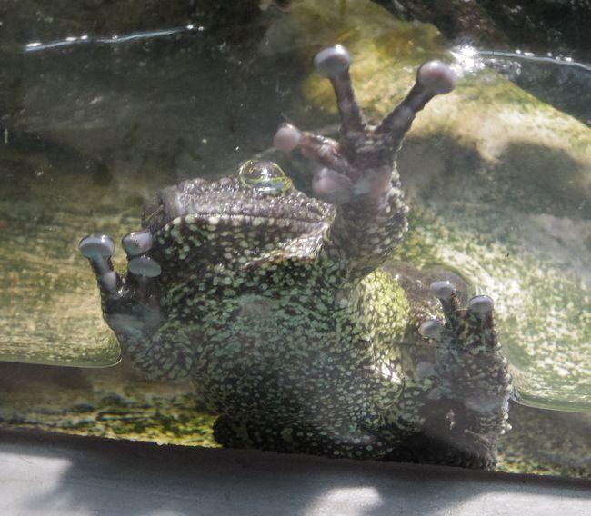 1月11日の円山動物園のは虫類・両生類館_b0014576_22464560.jpg