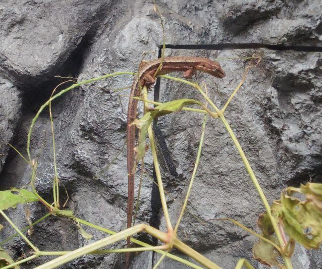 1月11日の円山動物園のは虫類・両生類館_b0014576_22470635.jpg