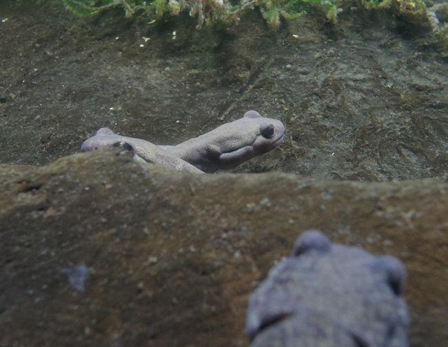 1月11日の円山動物園のは虫類・両生類館_b0014576_22471093.jpg