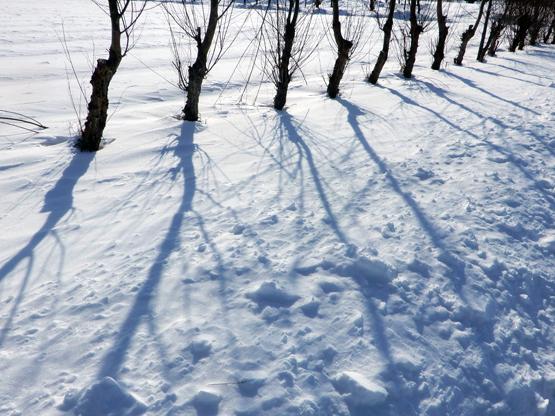 白と影_d0366590_16410206.jpg