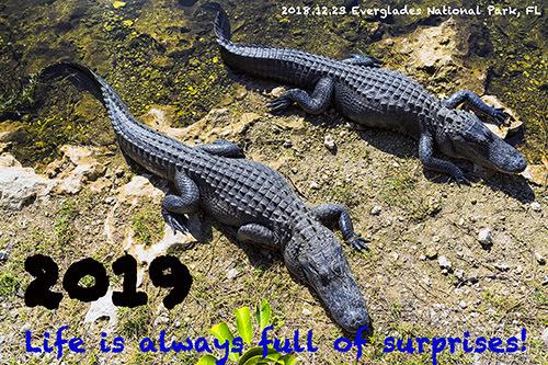 2011年からの年始のあいさつ画像を振り返ってみる③_c0148812_15291733.jpg