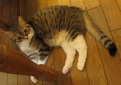 猫とカスミソウ_d0126116_17592309.jpg