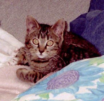 猫とカスミソウ_d0126116_17593214.jpg