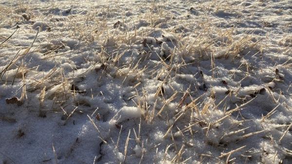 雪降るも雪解けのスピードいと早し。フィールドの様子は?_b0174425_10191380.jpg