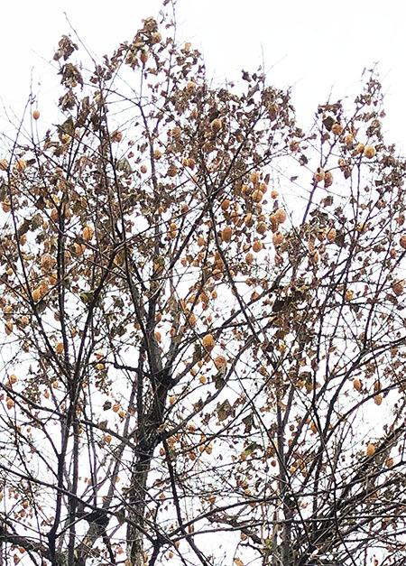 街の植物 58_f0149442_23262272.jpg