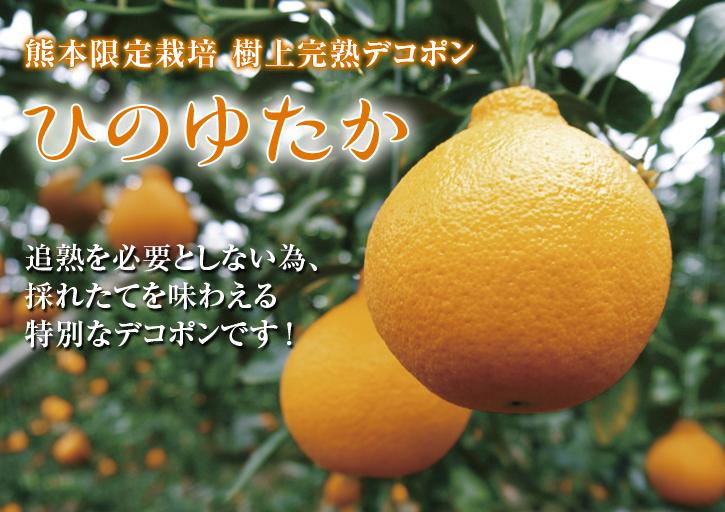 令和3年の樹上完熟デコポン(肥後ポン)『ひのゆたか』本日初出荷!収穫の様子とその美味さ!!(後編)_a0254656_17545107.jpg