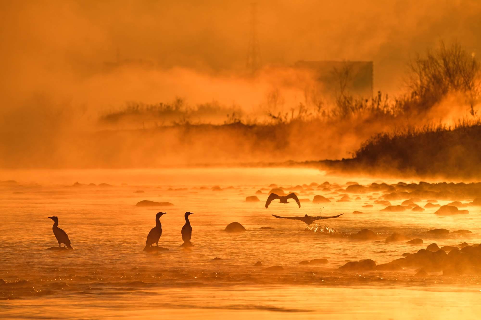 多摩川の川霧・鵜と鷺_f0173596_10145992.jpg