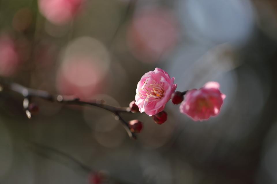 春隣 〜はるとなり〜_d0354901_22383420.jpg