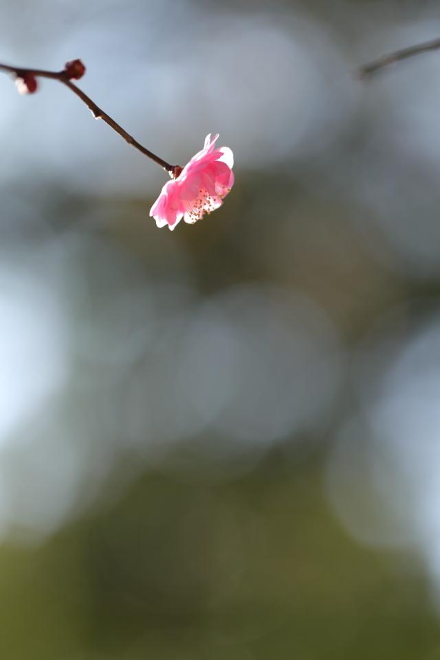 春隣 〜はるとなり〜_d0354901_22383539.jpg