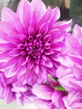 花の仕入れ_b0113510_14462965.jpg