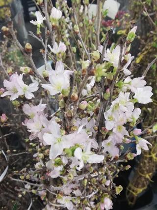 花の仕入れ_b0113510_14471463.jpg