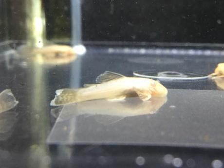 210114 熱帯魚 めだか 水草_f0189122_12395098.jpeg