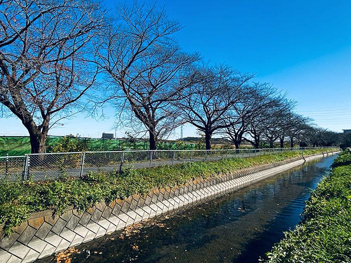 さいたま市緑区東浦和 / iPhone 11_c0334533_17291101.jpg