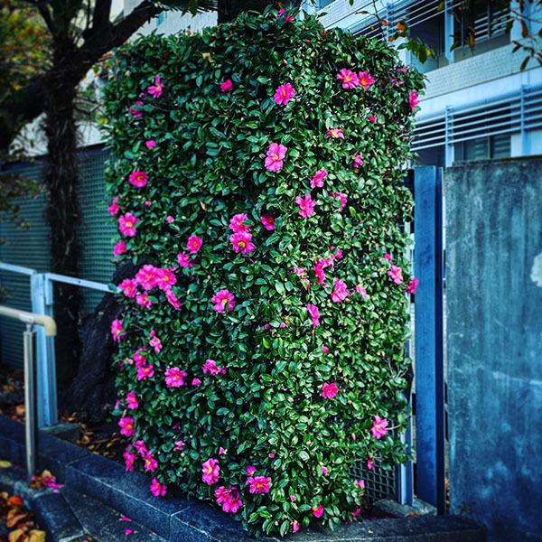 品川区東五反田 / iPhone 11_c0334533_17434247.jpg