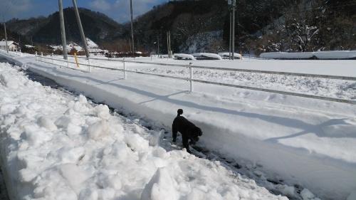 大雪に見舞われた年末年始でした。_c0300035_16440373.jpg