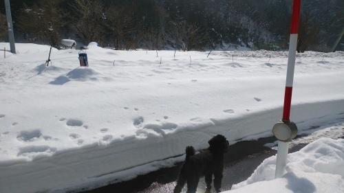 大雪に見舞われた年末年始でした。_c0300035_16442854.jpg