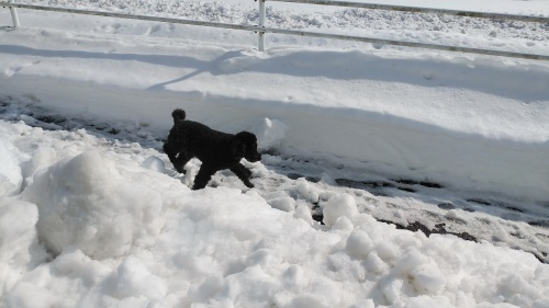 大雪に見舞われた年末年始でした。_c0300035_16444158.jpg