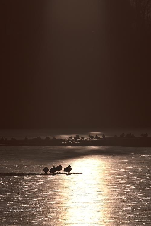 冬の朝 @ 氷結の 水上池_a0212036_05081242.jpg
