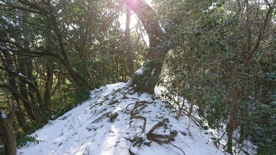 雪の跡_b0282042_17340208.jpg