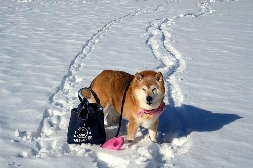 Snow life_b0314043_09422404.jpg