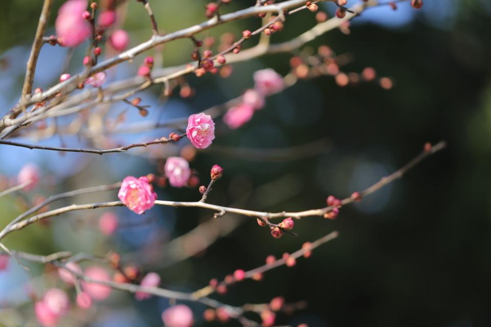 春隣 〜はるとなり〜_d0354901_09082059.jpeg