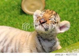 虎刈り_c0016913_16150194.jpeg