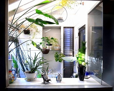 温室のある暮らし_e0010418_16165606.jpg