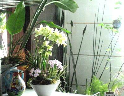 温室のある暮らし_e0010418_16165621.jpg
