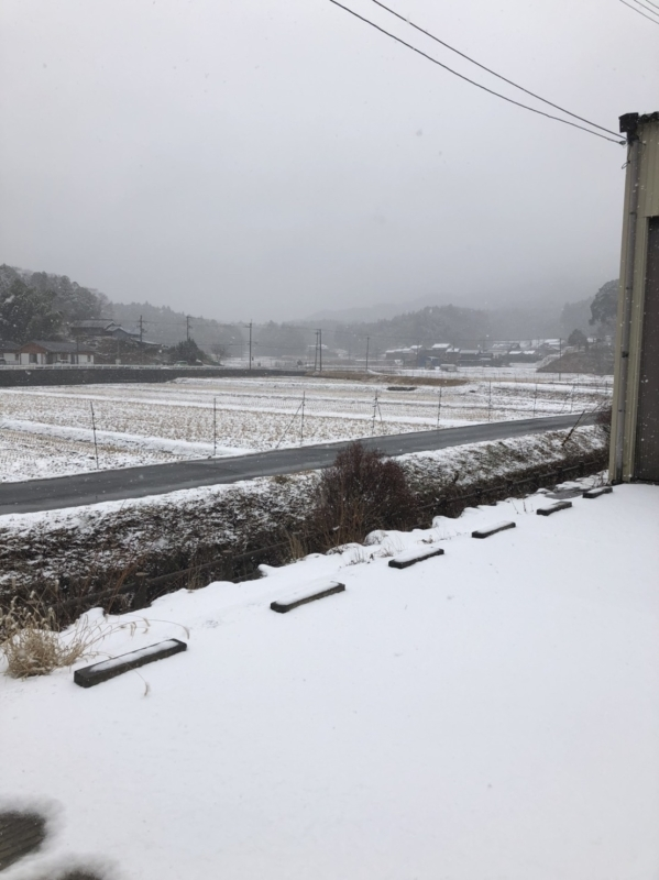 雪❄️_e0415021_16160510.jpg