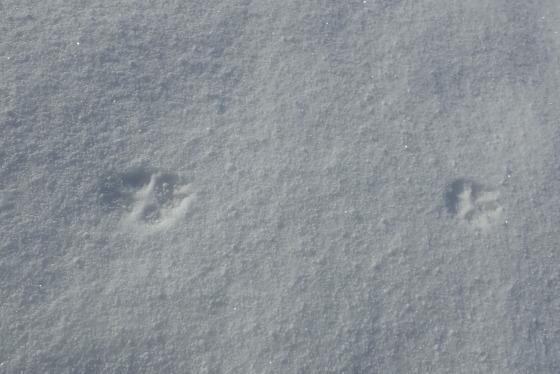 堅雪渡り_f0118332_23432216.jpg