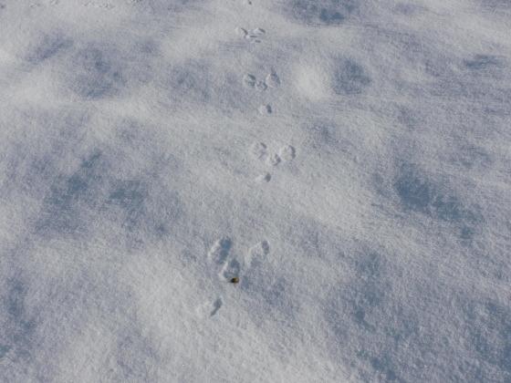 堅雪渡り_f0118332_23440061.jpg