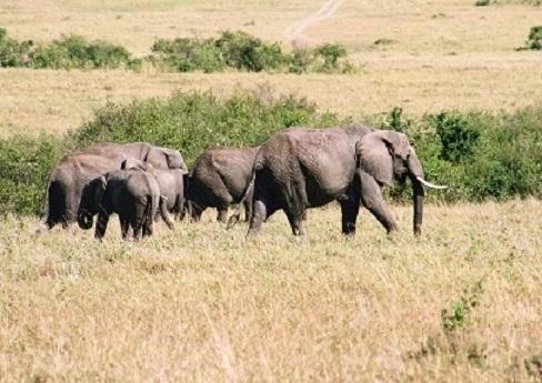 個人旅行の始まりはアフリカ旅行からだった_b0076334_11012550.jpg